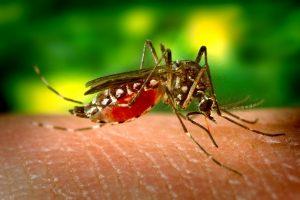 Los mejores repelentes de mosquitos de 2020